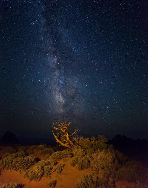 Grand View Tree Milky Way