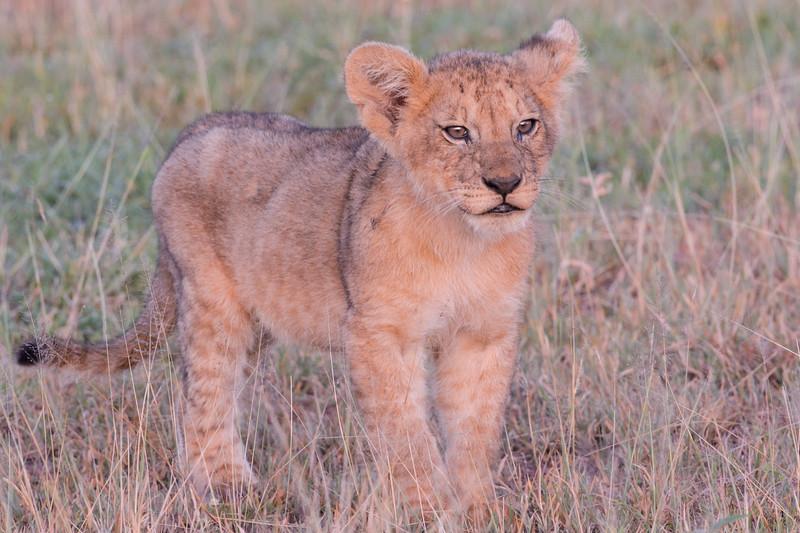 20160215__KET7220_Serengeti_Day_7.jpg