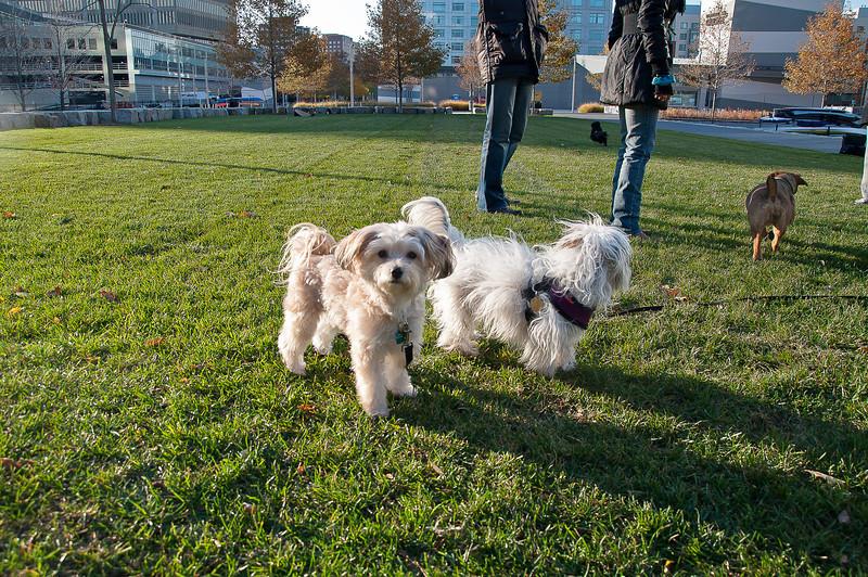 dog run05.jpg