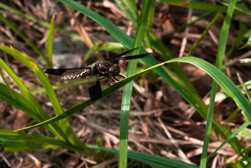 Friday Bug Walk-4.jpg