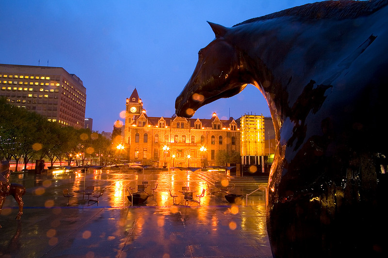 Horse statue in front of the Calgary Municipal Building looking at City Hall. The camera was getting quite wet at this point!