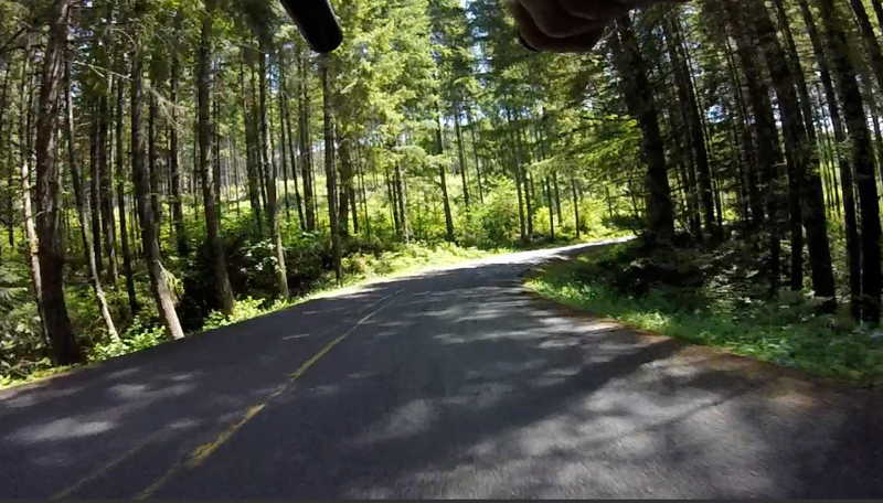 riding through curves with beautiful forest around me.