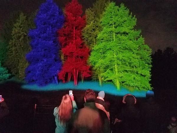 Arboretum Illumination