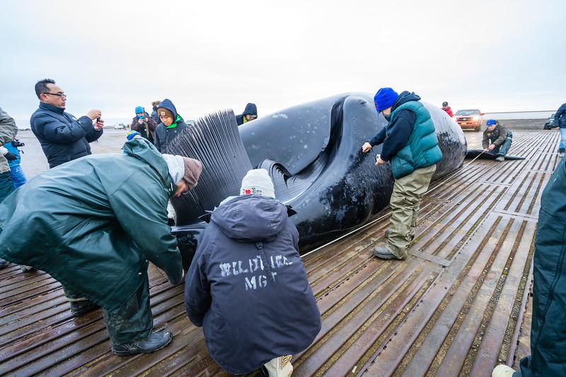 Utqiagvik Whaling-6968-Juno Kim-nw.jpg