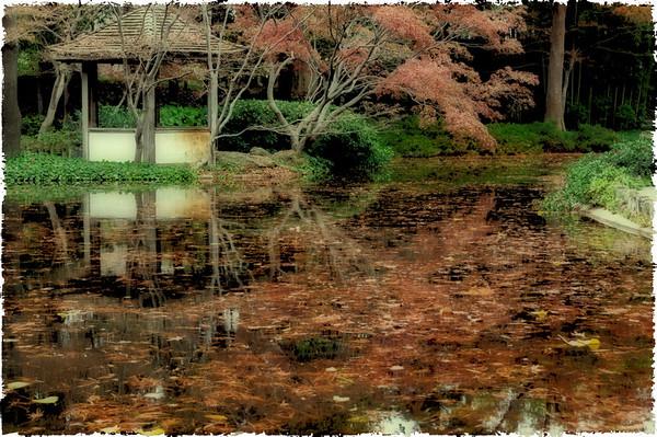 Ft. Worth - Japanese Gardens - 12/18/2011