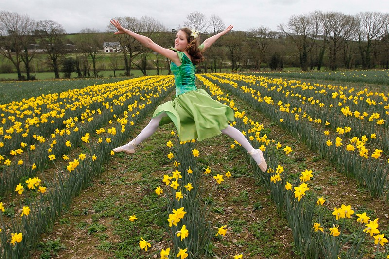 Katie Archer from the Joan Denise Moriarty School of Dance in the Little Silver Daffodil Farm, Castle Lack Bandon launching the Irish Cancer Society Daffodil Day Pic Darragh Kane