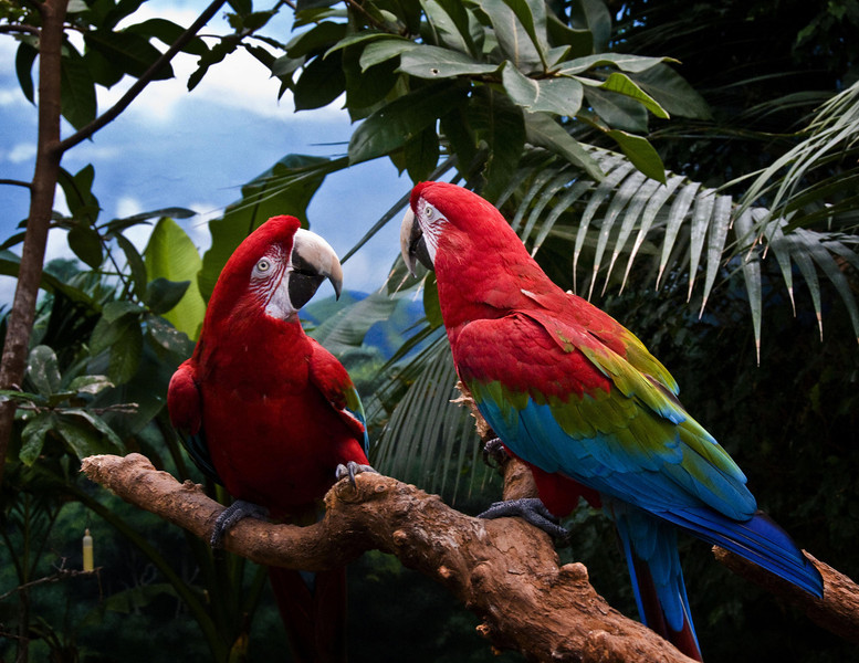 2 parrots L.jpg