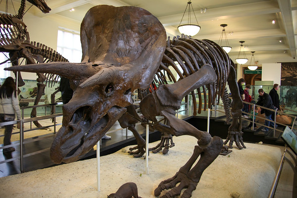 Day at the Museum of Natural History - March 24, 2013