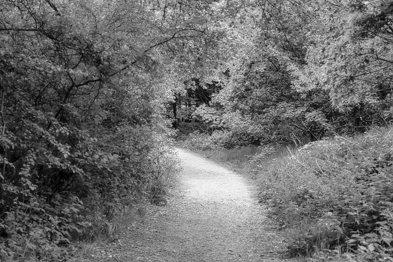 Sunday Stroll-91.jpg