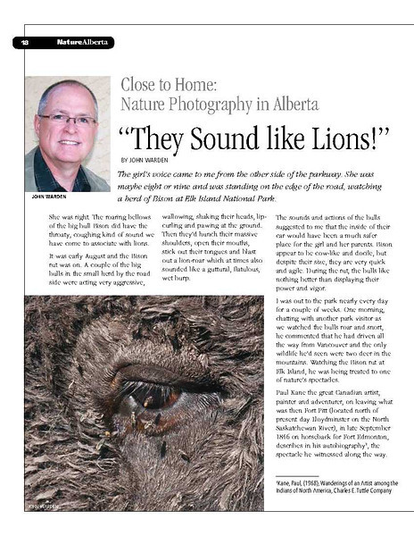 They Sound LIke Lions_1.jpg