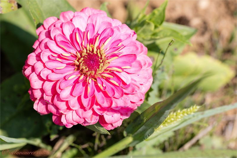 Blumen zum Selberschneiden - 2015-08-13- 0U5A1503.jpg