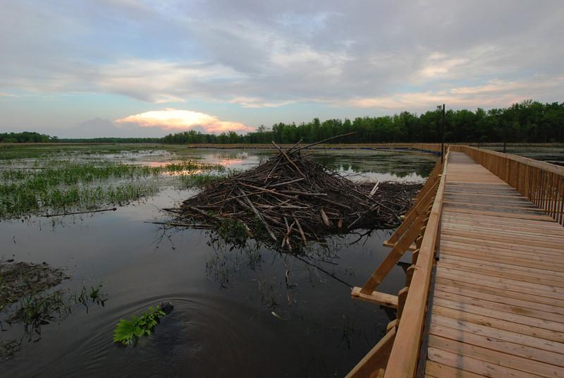 Castor et sa hutte - Parc de Plaisance, Québec