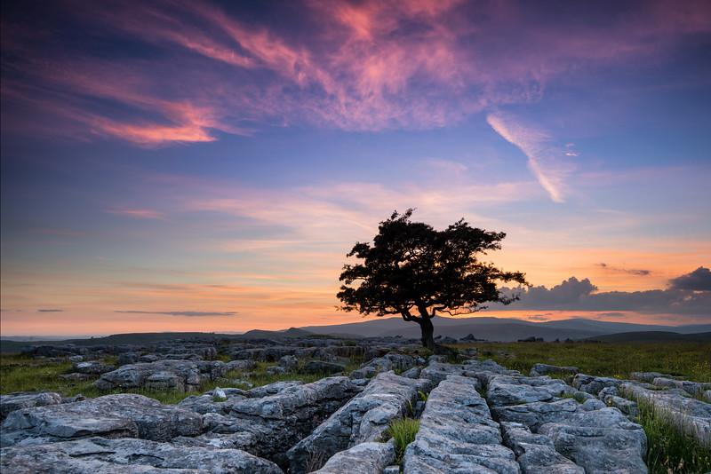 Dales tree.jpg
