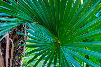Shady Florida Forest