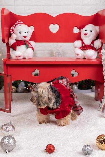 12.10.19 - Leide e Mel's (Mel Pet) Studio Christmas 2019 - -1.jpg
