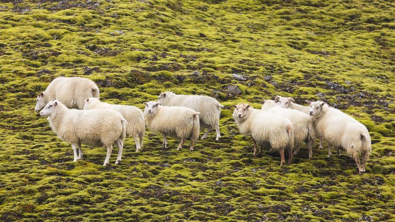 Iceland19_-1208.jpg