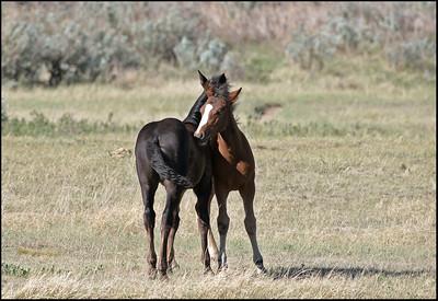 Horse - wild
