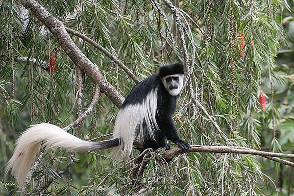 Kenia 2009 deel 2
