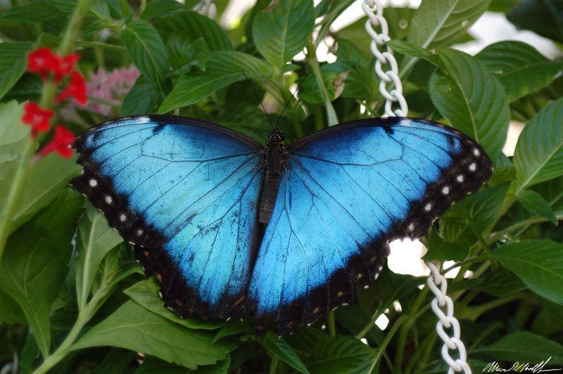 2006 Key West Butterflies DSC_0145.jpg