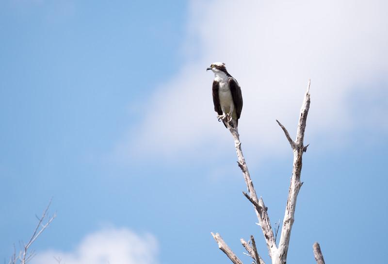 Everglades-38-2.jpg