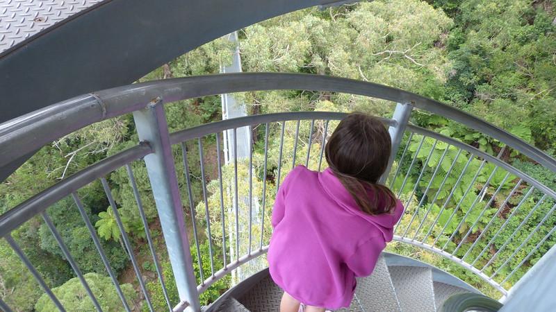Illawarra Tree Top Walk