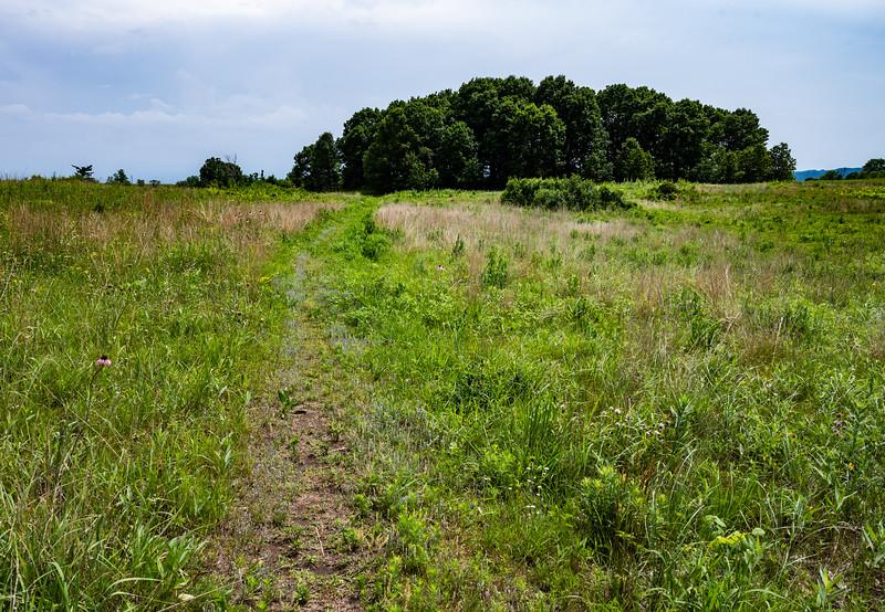 06-29-2020-trail-4.jpg