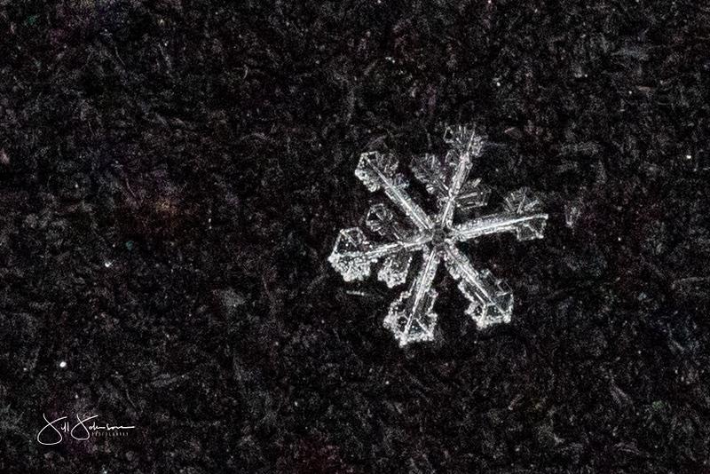 snowflakes-1244.jpg