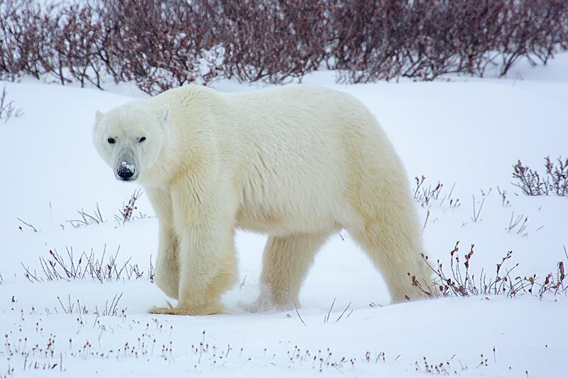 Wow bear.jpg