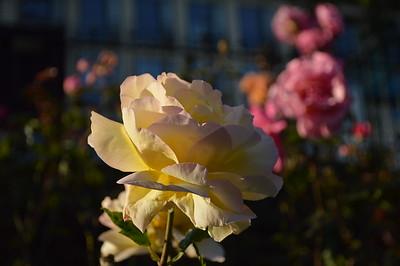 Flowers/Scotland