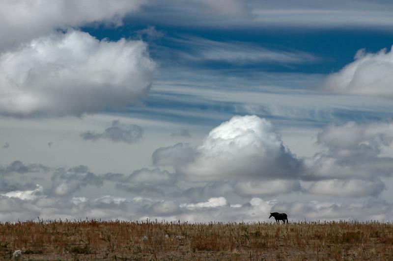 Wild Horse Under Big Sky #1