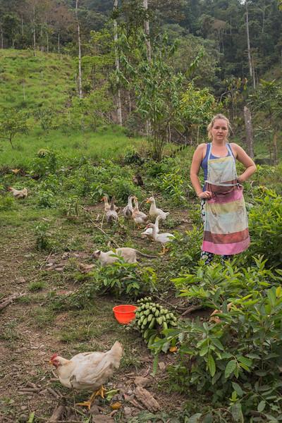 chick4-2.jpg