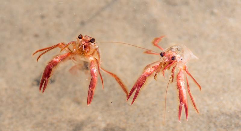Red Crabs-2.jpg