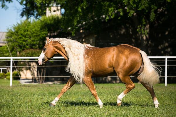 Horse Farm Calls