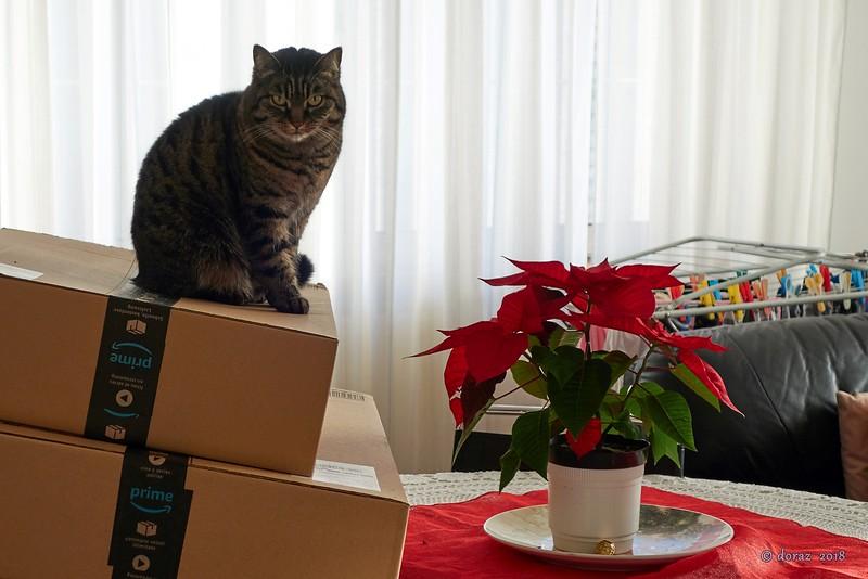2018-01 Pigra natalizia.jpg