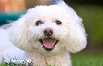 PupPixs.com