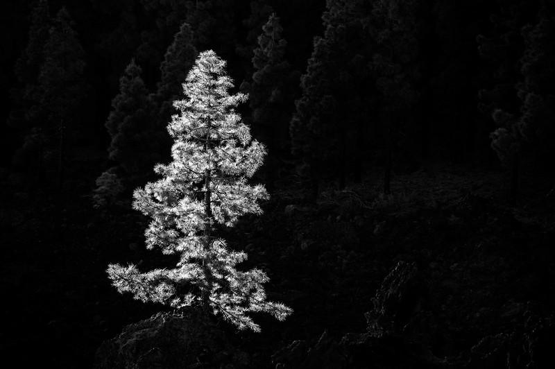 Teide_170526_6579-2.jpg