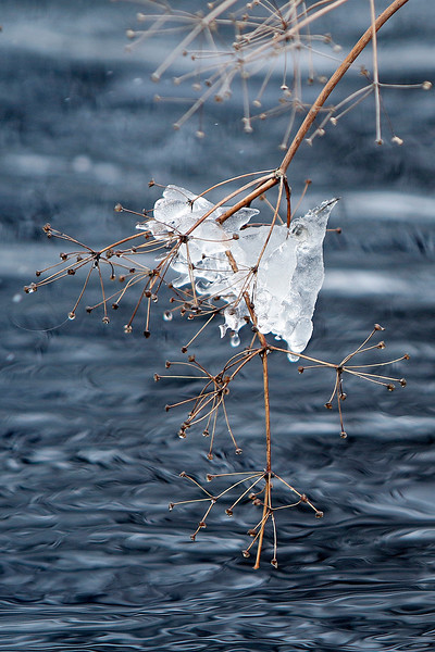 Ice on a branch over the canal
