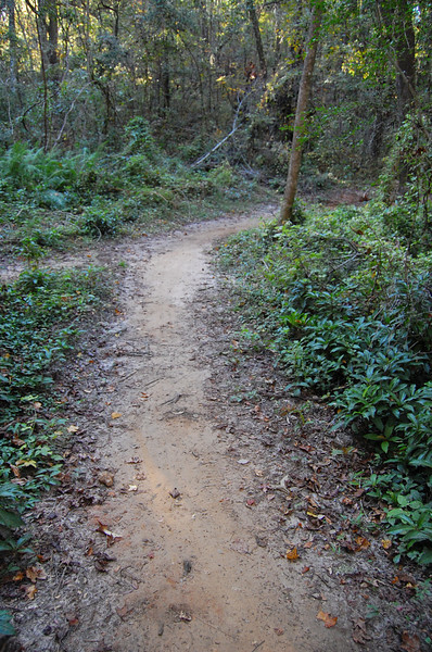 That's the old Sherwood Forest Trail to the left, heading back uphill toward the Hill of Death.