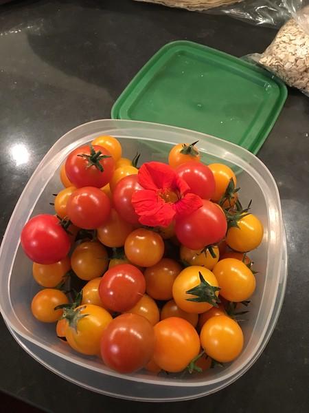 bounty from the garden