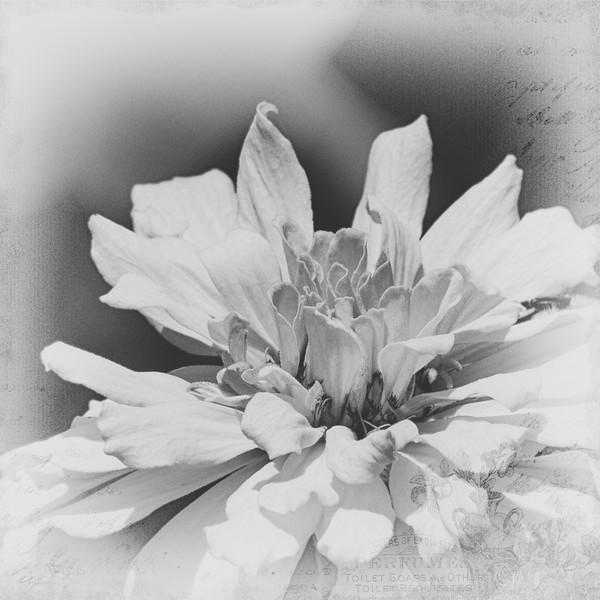 0374-Edit.jpg