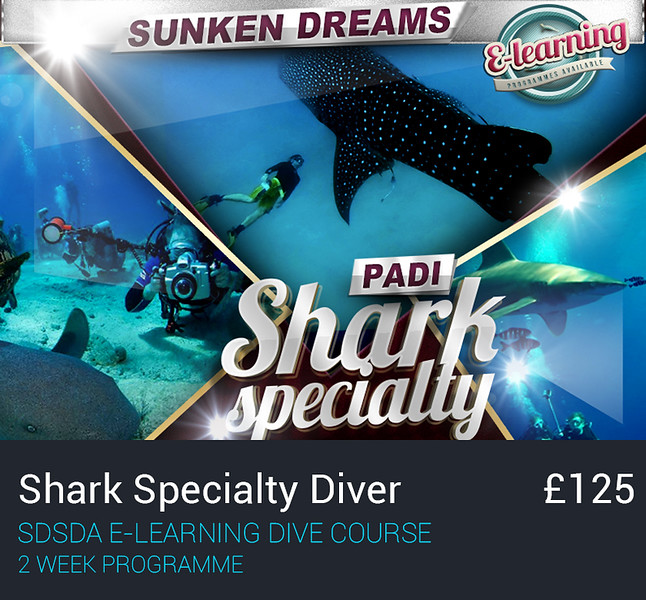 image1-courses-shark.jpg