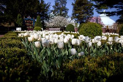 Botanical Gardens - Spring 2009