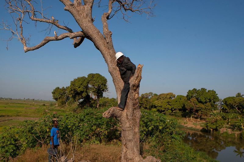 . In this Jan. 22, 2013 photo, snake handler Saintilus Resilus stands in a tree as he hunts for snakes that he will use in his Pre-Lenten Carnival street performances, in the countryside of L\'Estere, in Haiti\'s Artibonite state. Resilus has scars from owl bites on his hands, and palms rough like sandpaper from climbing trees to capture animals. Haiti\'s snakes aren\'t venomous, but they have poisoned some relationships. His wife left him in 1991. (AP Photo/Dieu Nalio Chery)