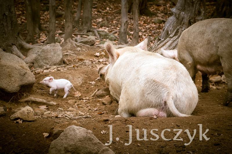 Jusczyk2020-8095.jpg