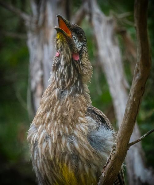 birds  000125.JPG