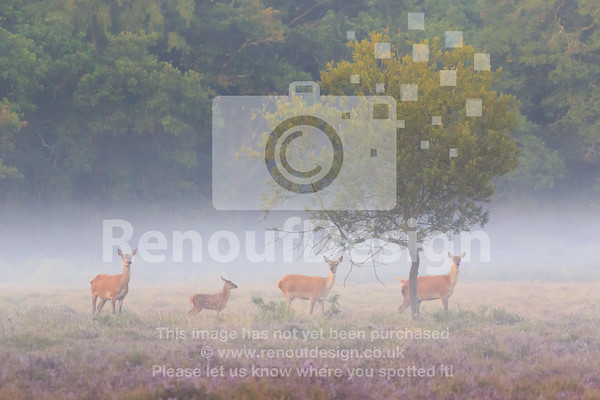 New Forest Prints