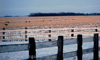 Deer around our farm