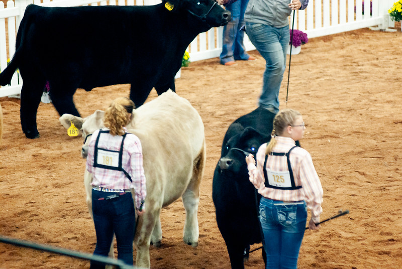american_royal_cattle-28.jpg