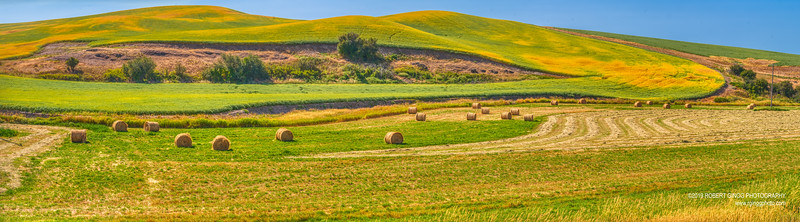 Palouse Day2-1363-Pano.jpg