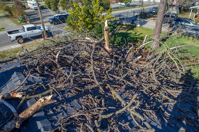 5671 Wallace Ave - Tree 1030am 12 16 2017 Extremly Windy Conditions-84.jpg